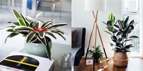 indoor plants good  plants  small space