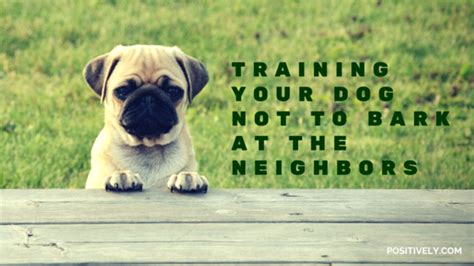 how to your not to bark on walks how to your not to bark at the neighbors stilwell positively