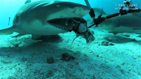 gopro shark hd shark bite gopro