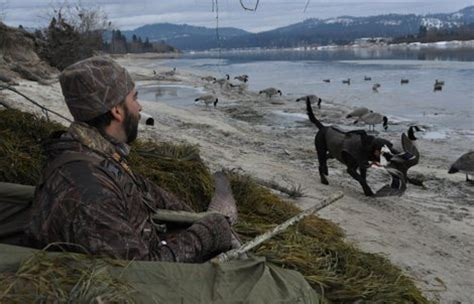goose boat dog waterfowl hunting topical coverage at spokesman
