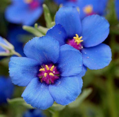 imagenes de flores mas lindas del mundo lista las flores mas bonitas del mundo
