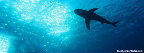 imagenes impresionantes del oceano tiburon en el oceano