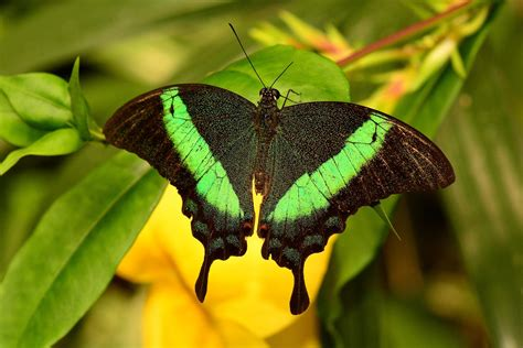Beautiful Butterfly 10 most amazing and beautiful butterflies in the world
