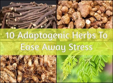 adaptogenic herbs  ease  stress