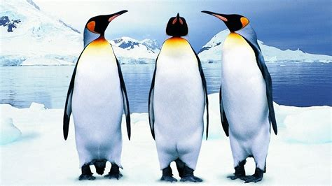 google images penguins penguin 2 1 is now live what to expect from google s