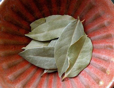 Pantry Moths Bay Leaves by A Bay Leaf Keep Bugs At Bay In Your Goods