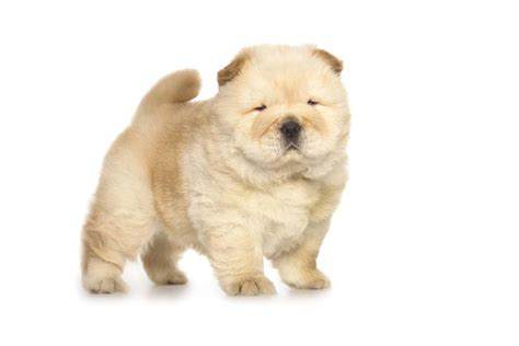 top dog breeds top 10 cute dog breeds you can t resist top dog tips