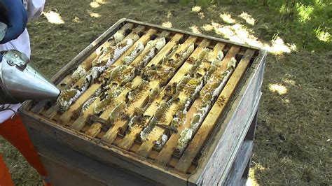 Raising Honey Bees In Your Backyard by Keeping Honey Bees The Honey Harvest 1 Setting Up The