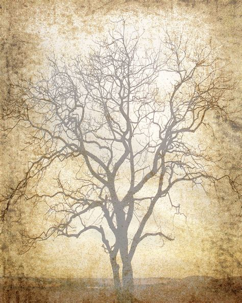 Trees For Paper - 5 best images of printable scrapbook paper tree free