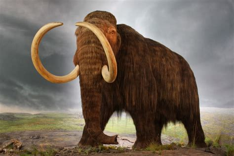 wooly mammoth ice age what our frozen past tells us about the ice age diet of