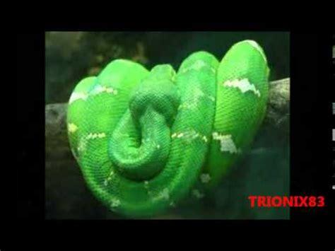 imagenes mas sorprendentes del mundo serpientes mas hermosas del mundo serpientes mas bonitas