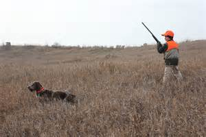 how to a to pheasant hunt pheasant more birds if you where to look the outdoor journal