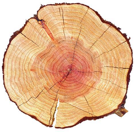 mobili di legno mobili in legno arredamento