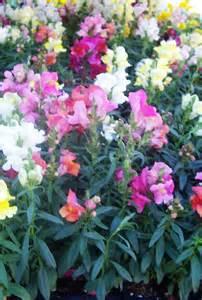Winter Flower Garden Winter Flowers For Sun Gardening On Mars