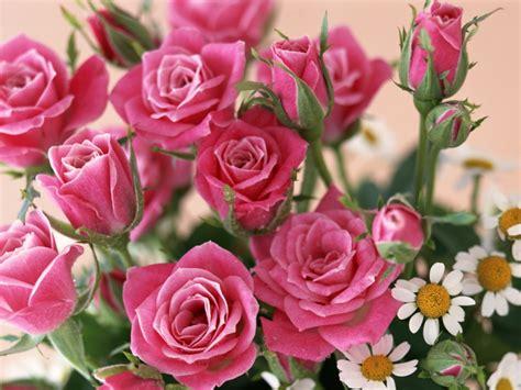 imagenes de rosas jpg like a boss fostos para facebook compartilher imagem de rosas