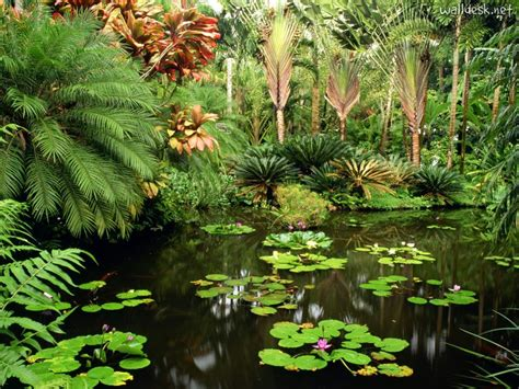 Largest Botanical Gardens In The World Hawaii Tropical Botanical Garden Home To The World S Largest Selection Of Tropical Plants