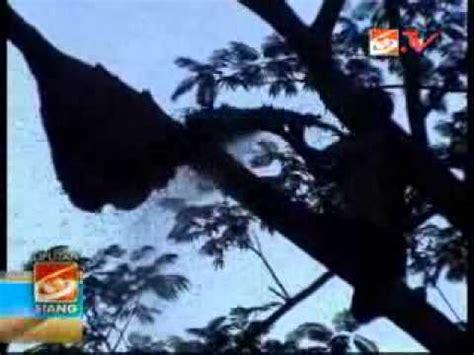 Madu Amfoang madu hutan asli madu hutan timor amfoang pin 76070e78