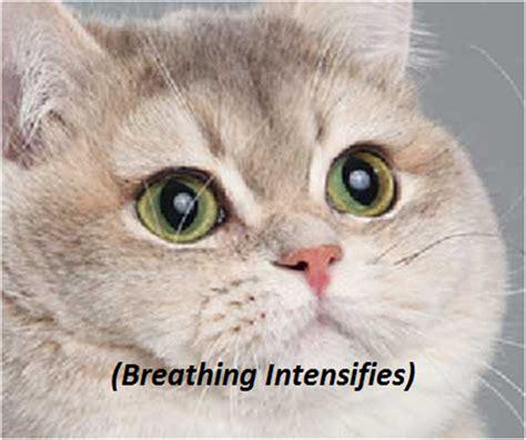 Cat Heavy Breathing Meme - breathing intensifies cat meme memes