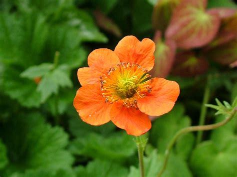 Orange Garden Flowers 2004