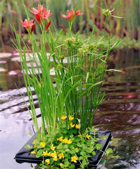buy pond plants  floating plant island bakkercom