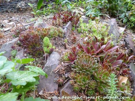 crevice gardens rockeries cliff gardens or scree