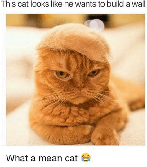 Mean Cat Meme - 25 best memes about mean cat mean cat memes