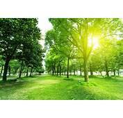 唯美的自然景色阳光�林景色  素材公社 Tooopencom