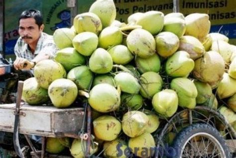 Kelapa Besar kementan dorong ekspor kelapa dalam volume besar