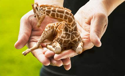 imagenes uñas jirafas tiny giraffes from directv ads now for sale adweek