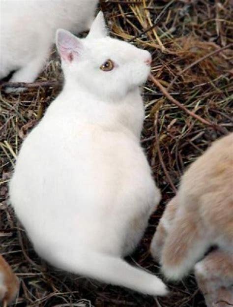 cabbit images marvin eley cabbit