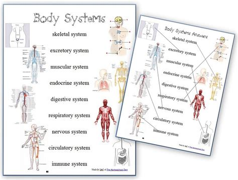 Systems Worksheet by Human Systems Worksheets Images