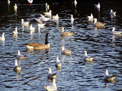 file birds on water jpg