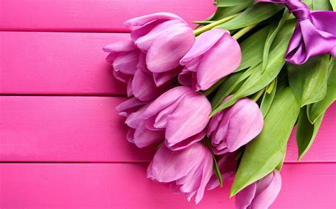 wallpaper bunga tulip pink flowers spring lovey pink tulips hd wallpaper wallpapers