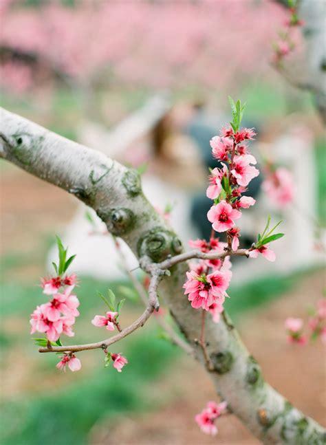 cherry blossom branch elizabeth anne designs