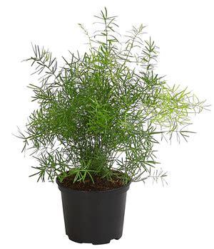 Verpiss Dich Pflanze Kaufen 3259 by Verpiss Dich Pflanze Dehner