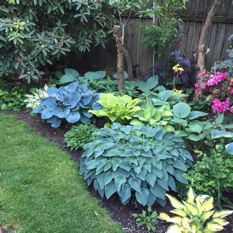 black gold top 10 shade garden plants for the pacific northwest