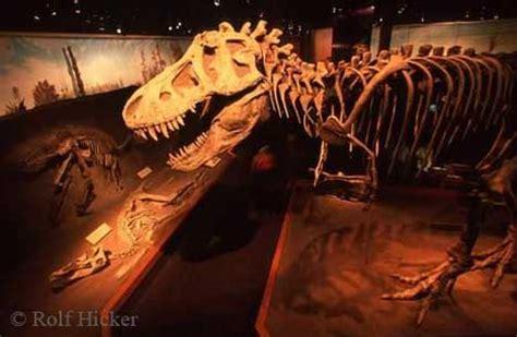 fossil by fossil comparing dinosaur bones books rareresource korean dinosaur photo book hits shelves