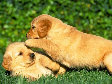 imagenes de animales juguetones imagenes de perros tiernos