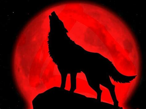 Transformers Wall Mural a wolf howling to the blood moon i heart wolves