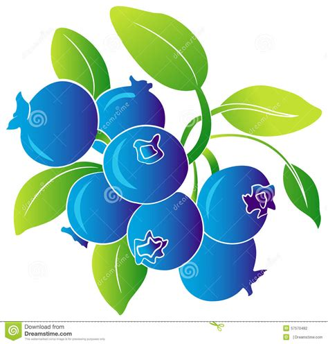 blueberries cartoons illustrations vector stock images  pictures