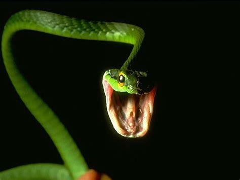 Time To Be A Real Snake by Real Snake On A Plane Forces An Emergency Landing