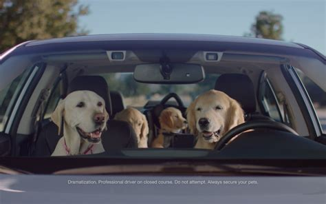 subaru commercial with kid driving car autos post puppy bowl 2016 subaru s family of lovable dogs drive