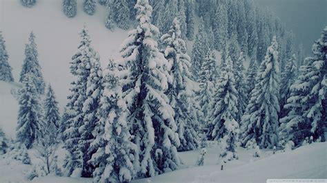 download snowy fir trees 3 wallpaper 1920x1080 wallpoper