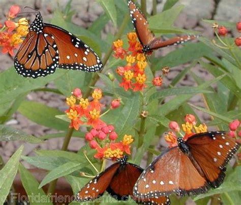 gardening for butterflies butterfly garden ideas miami knoll landscape design