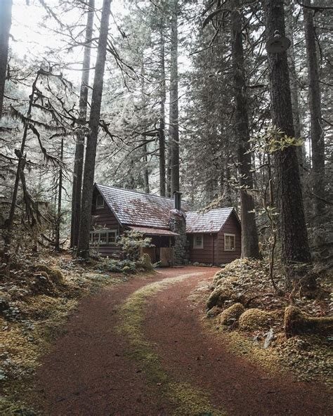 Who Survives In Cabin In The Woods by 25 Best Ideas About Forest Cabin On Cabin