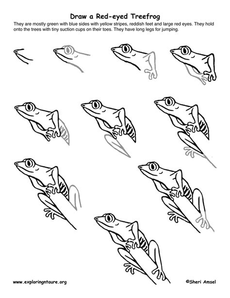 Drawing A Tree Frog Step By Step by Eyed Treefrog Drawing Lesson