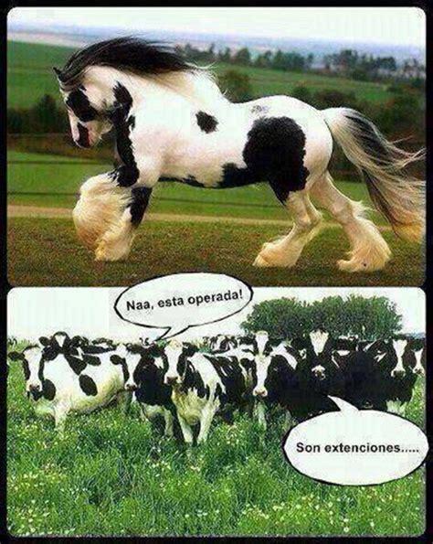imagenes virgas memes los 10 mejores memes de vacas contexto ganadero