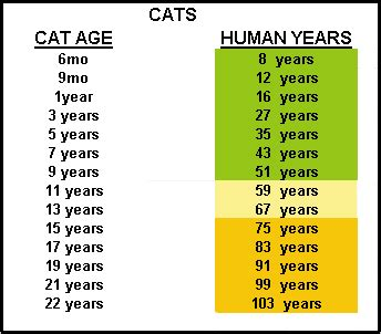 how old is your pet in people years mercyvet