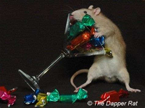 new year what does rat the book rat happy new year
