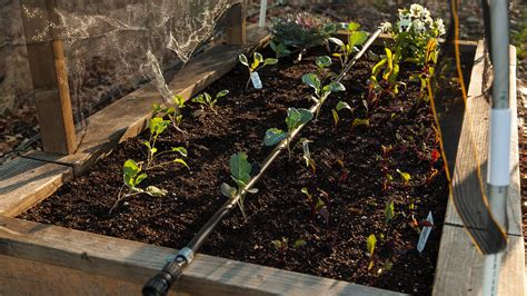 drip irrigation for raised beds easy drip irrigation for raised beds organic gardening blog